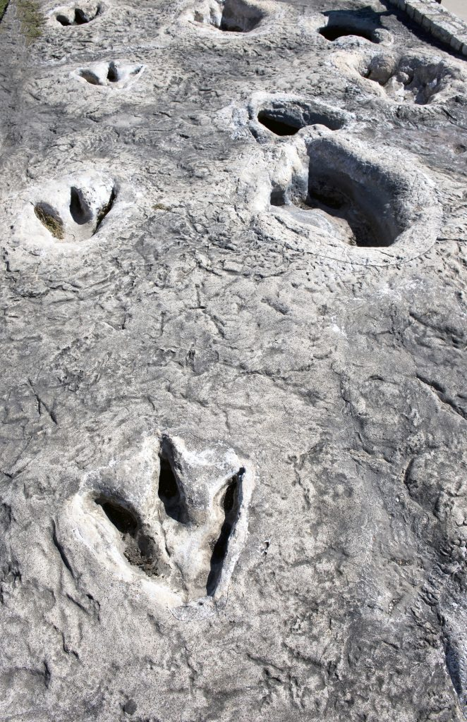 fossilized dinosaur tracks in dinosaur valley state park, one of the fun road trips from ft worth tx