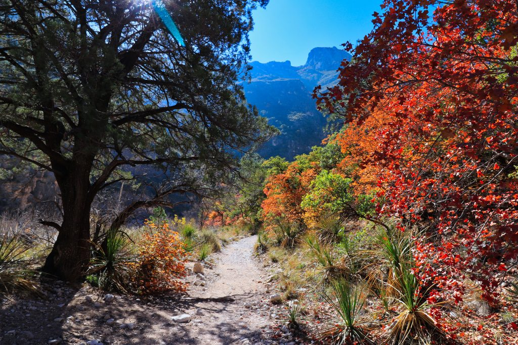 fall colors in texas lining a rugged trail in guadalupe mountains np