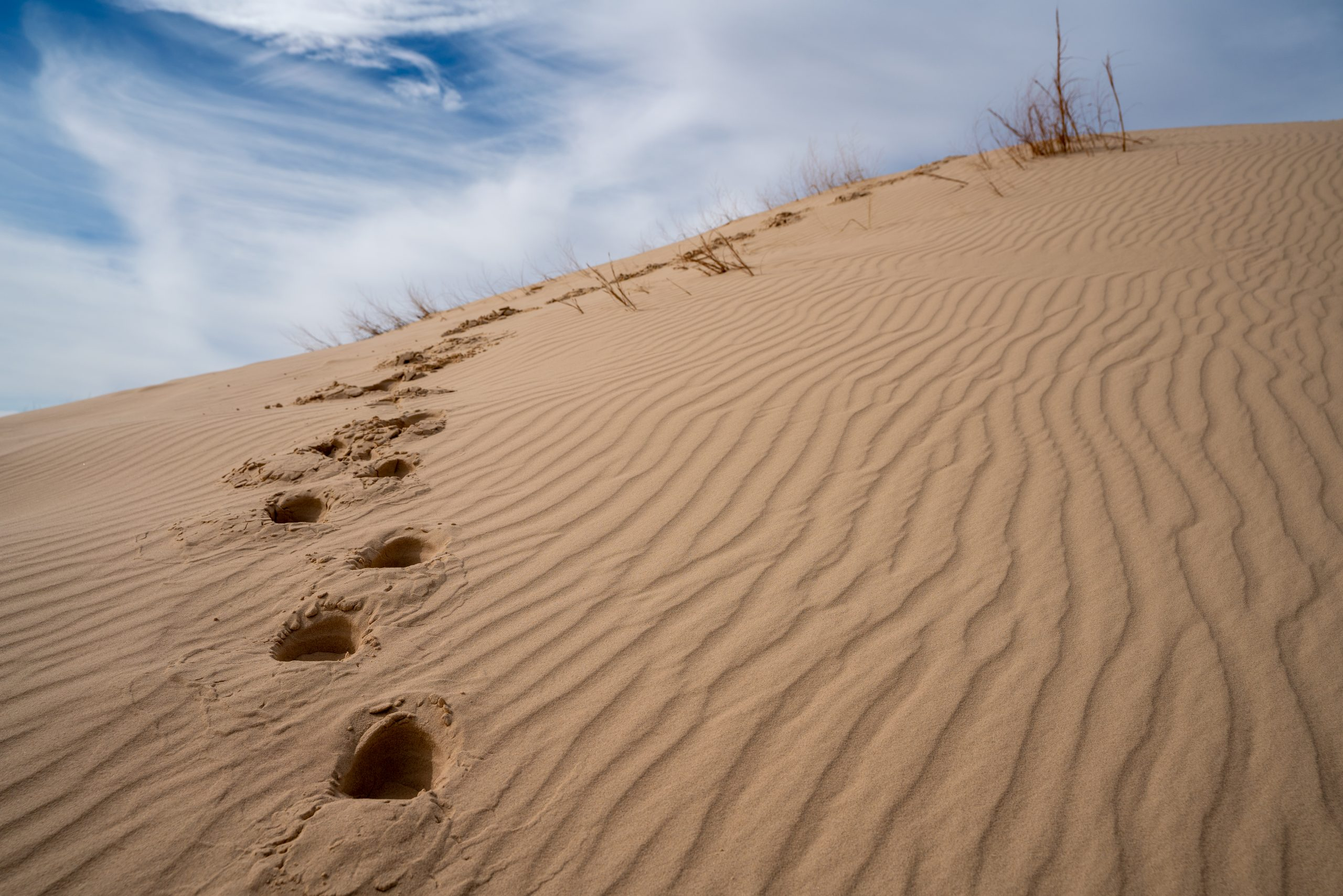footsteps leading up a dune in monahan sandhills, one of the best state parks in west texas
