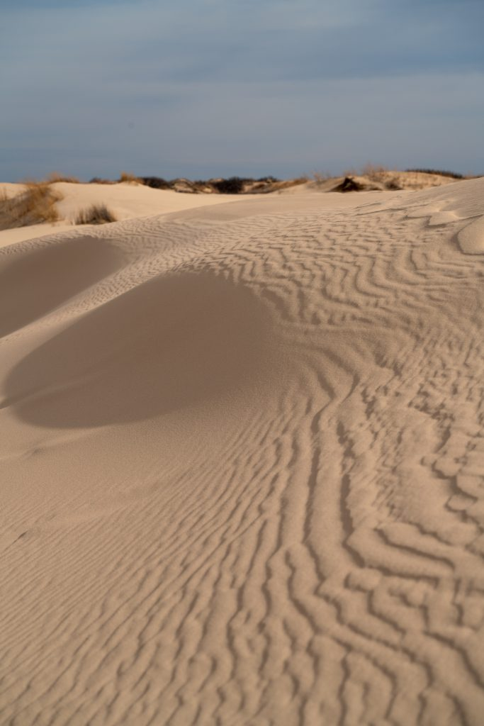 sand dunes at monahans sandhills state park, oneo f the best west texas state parks
