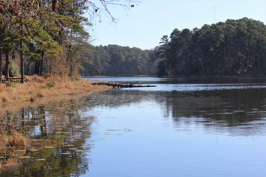 tranquil view over lake in daingerfield state park, one of the best state parks in east texas