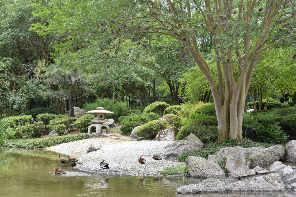 japanese garden at hermann conservancy in houston, one of the best things to do in south texas