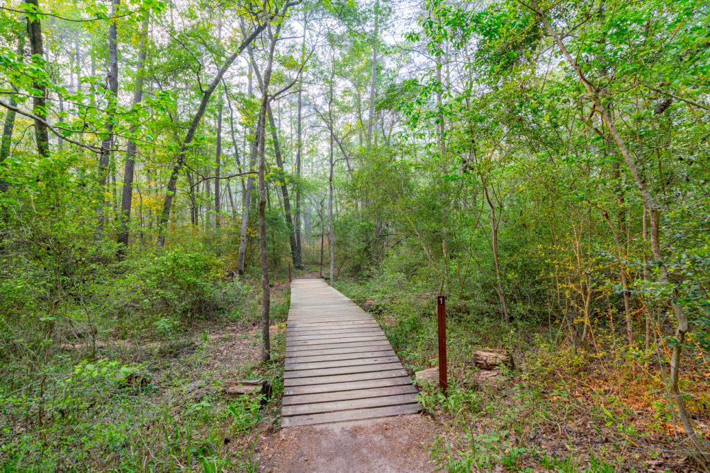 small bridge in the piney woods as seen when hiking, one of the best things to do in huntsville state park texas