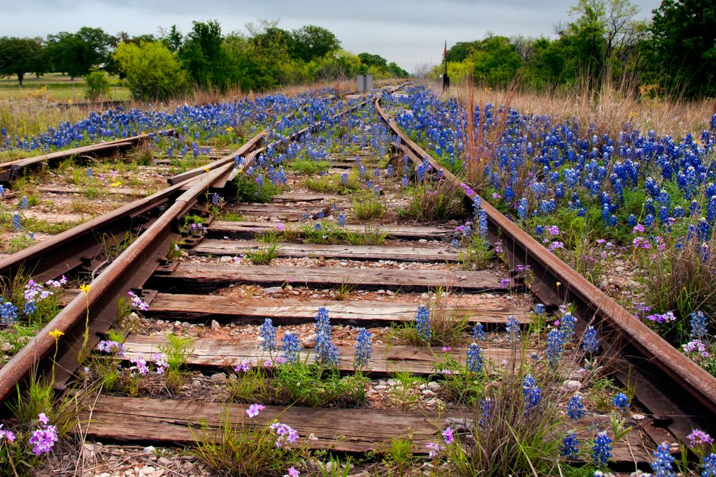 abandoned railroad in texas with bluebonnets growing on it, near one of the abandoned texas ghost towns