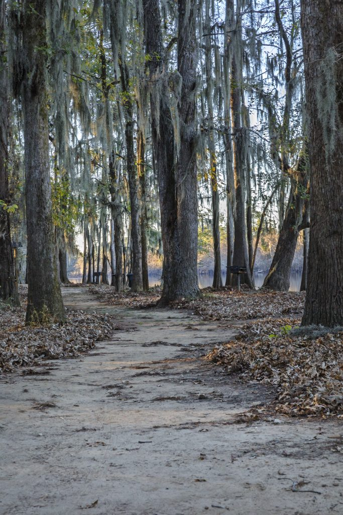 trail at caddo lake texas with spanish moss dripping from trees
