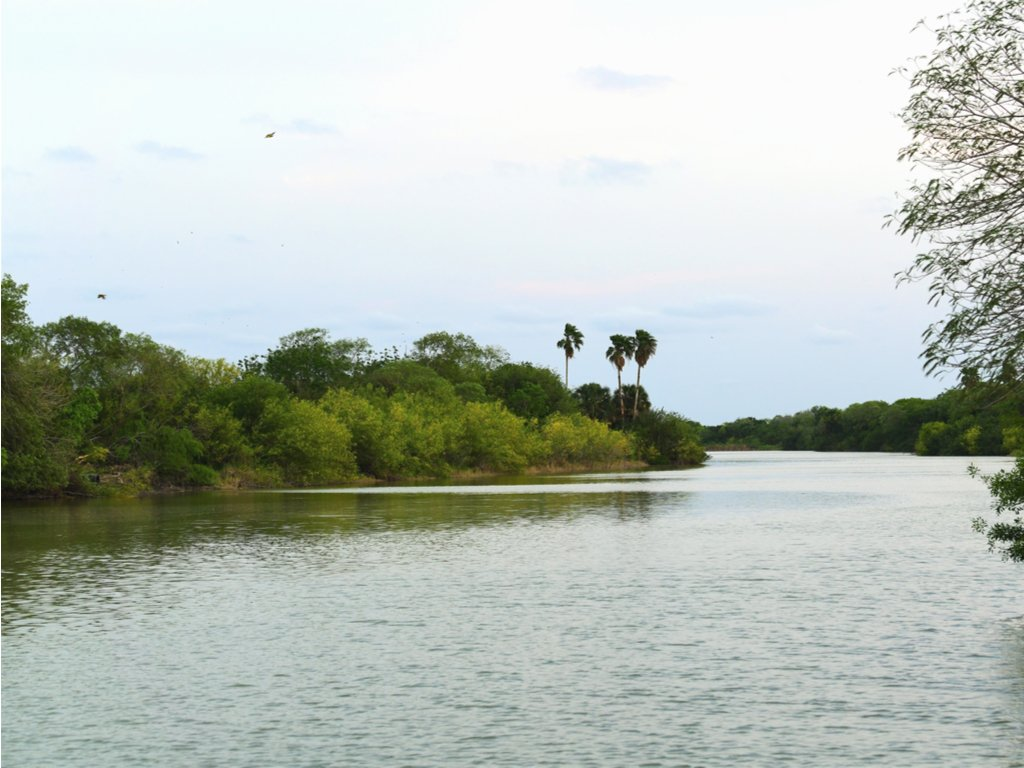 view of palm trees across the water on a cloudy day at resca island, one of the best state parks in tx