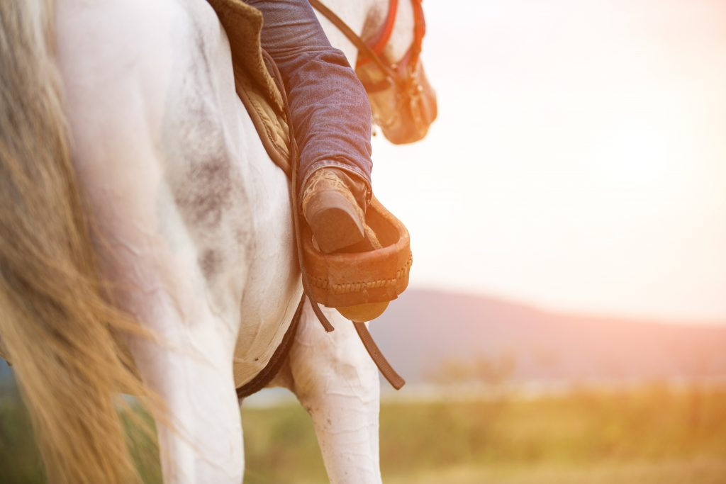 close up of a rider on a white horse