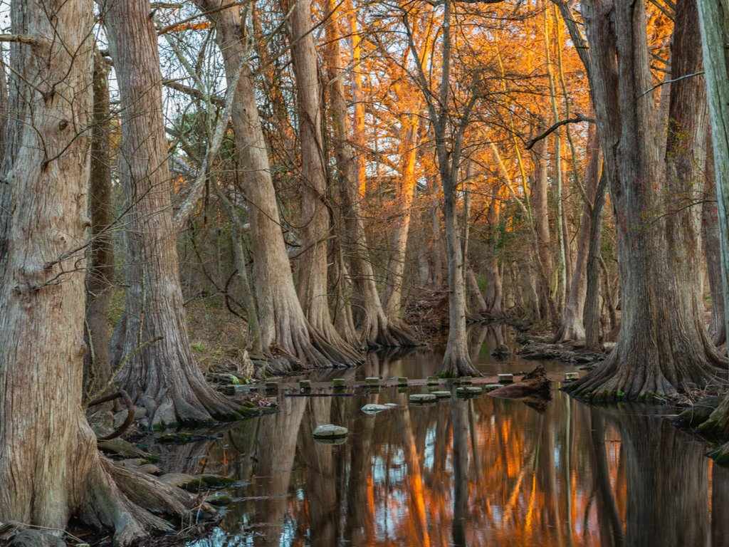 cibolo creek lined with bald cypress trees as cibolo nature center, one of the best places to visit in boerne texas