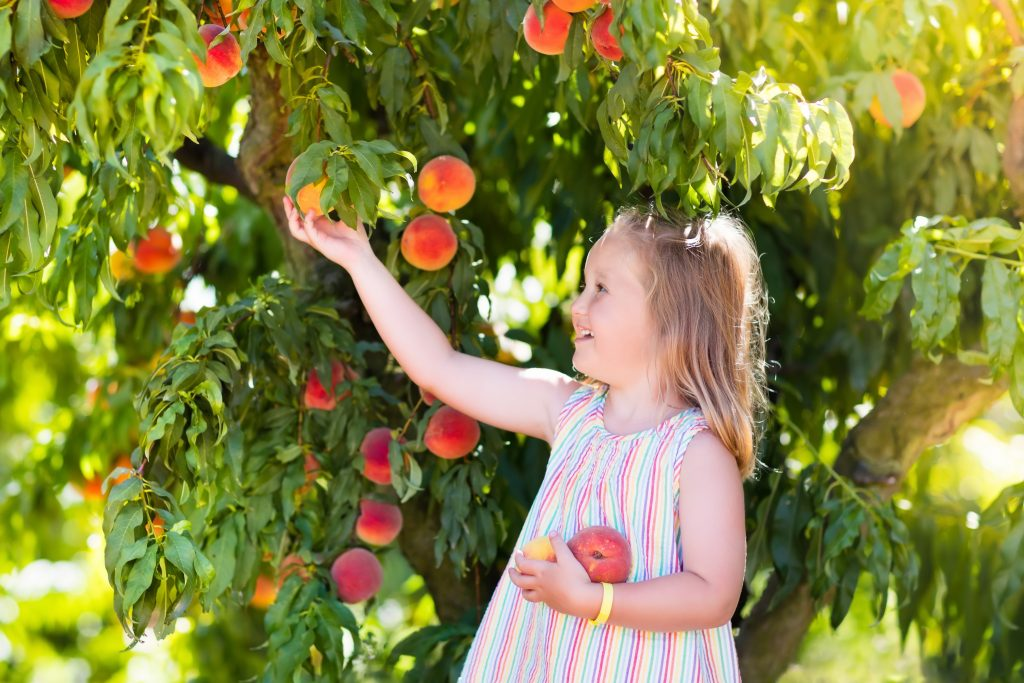 young girl picking peaches texas