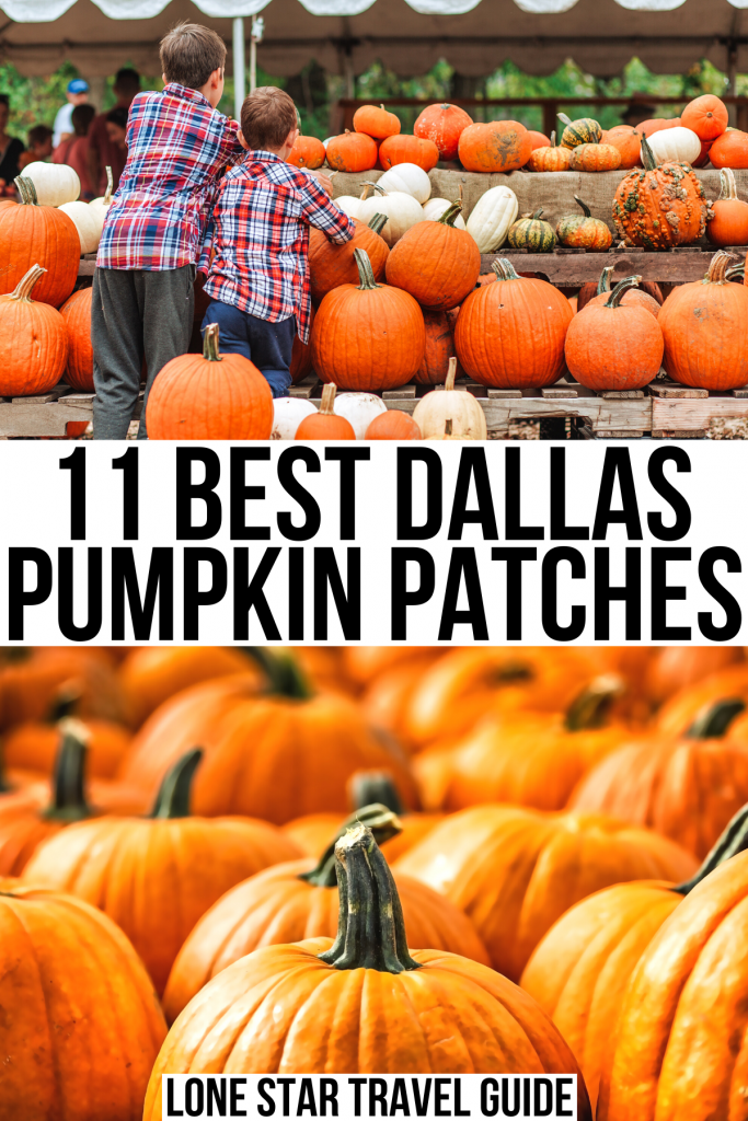 """2 photos of pumpkin patches, black text on a white background reads """"11 best dallas pumpkin patches"""""""