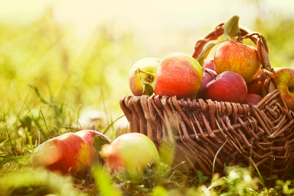 basket of apples sitting in the grass