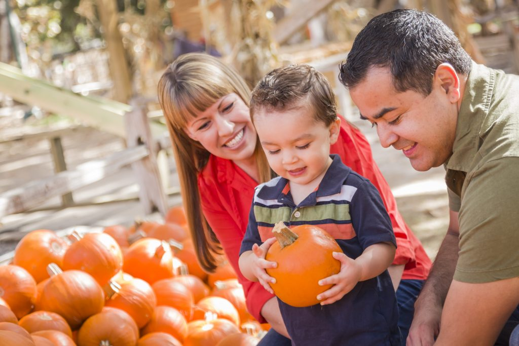 young family picking out a pumpkin with their toddler son