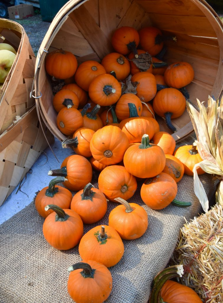 collection of tiny pumpkins spilling out of a basket