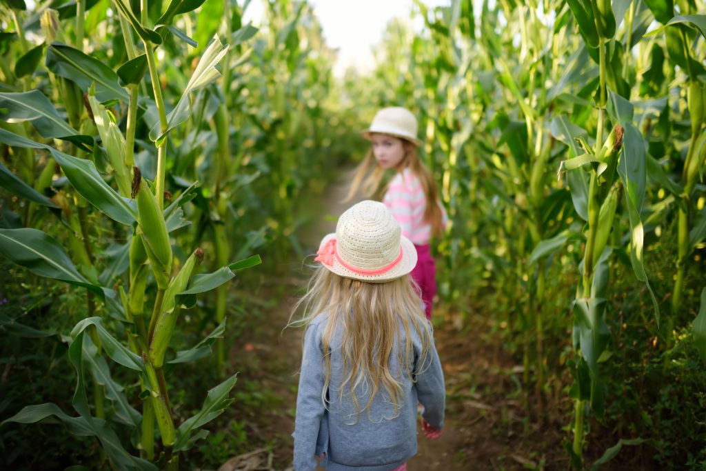 two young girls wandering through austin corn mazes
