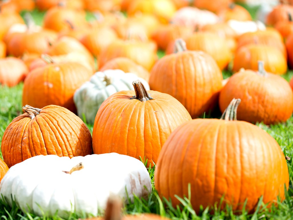 collection of pumpkins near austin tx resting on grass