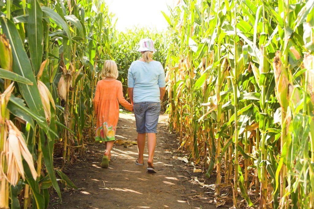 two children walking through one of the corn mazes near dallas tx