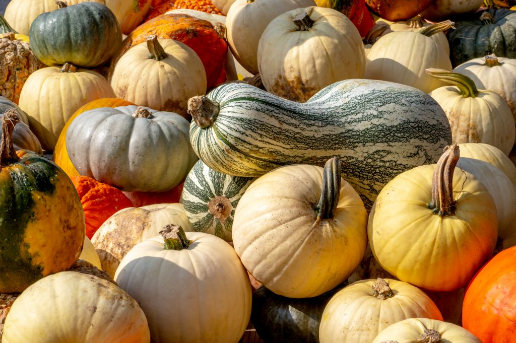 pile of colorful gourds and pumpkins as seen from above, best pumpkin patches near dallas texas