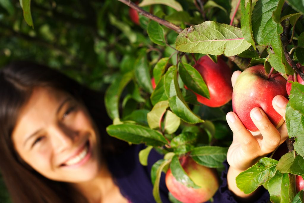 photo of a woman reaching up to pick apples texas