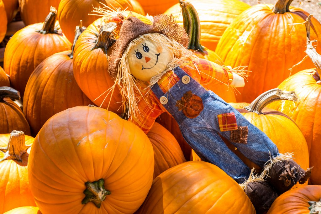 a small scarecrow laying on a pile of pumpkins