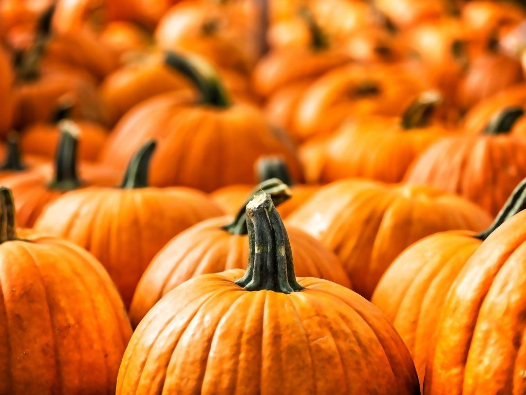 close up shot of large orange pumpkins dallas texas