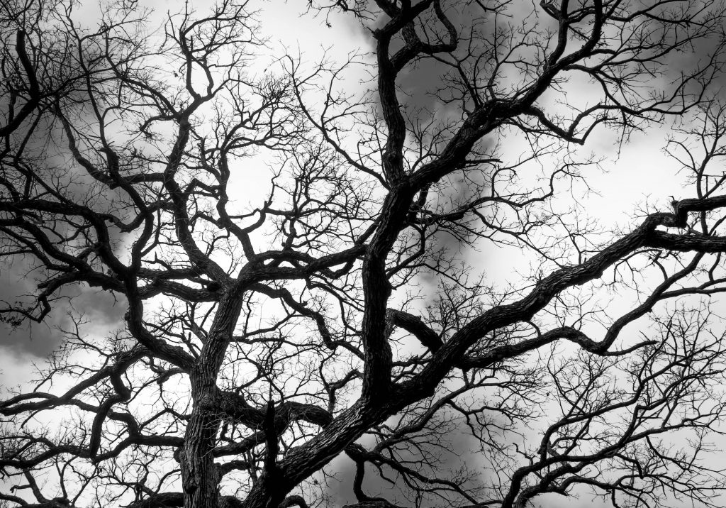 black and white photo of a tree river legacy park