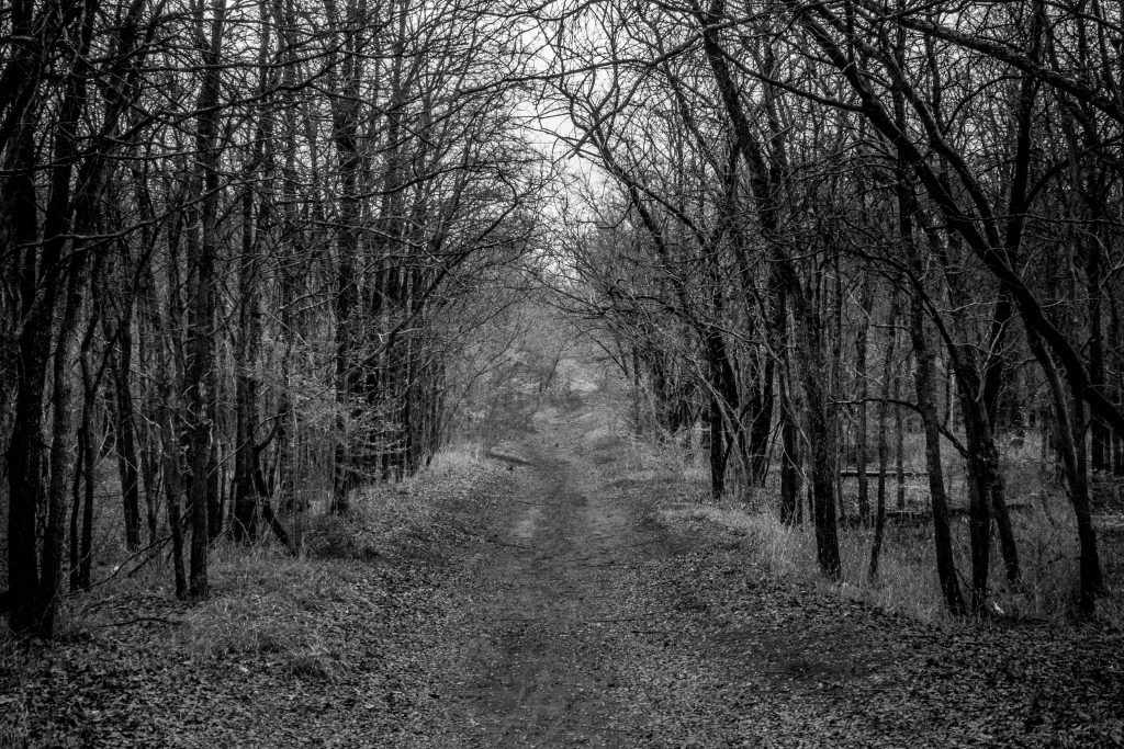 woods in river legacy park, one of the best dallas ghost destinations