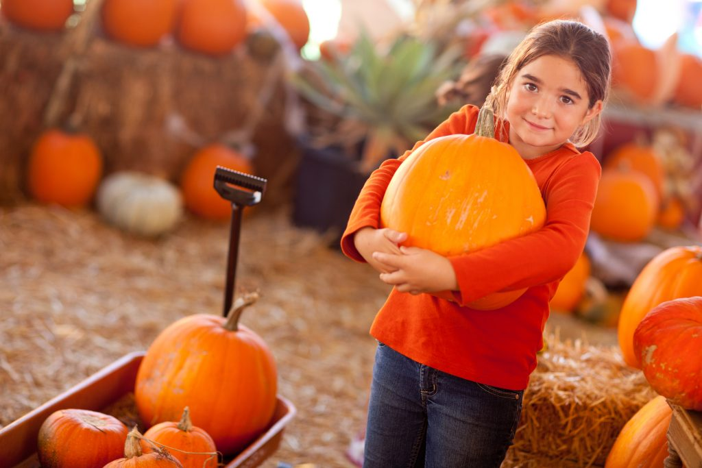young girl in a red shirt choosing a pumpkin at a houston pumpkin patch
