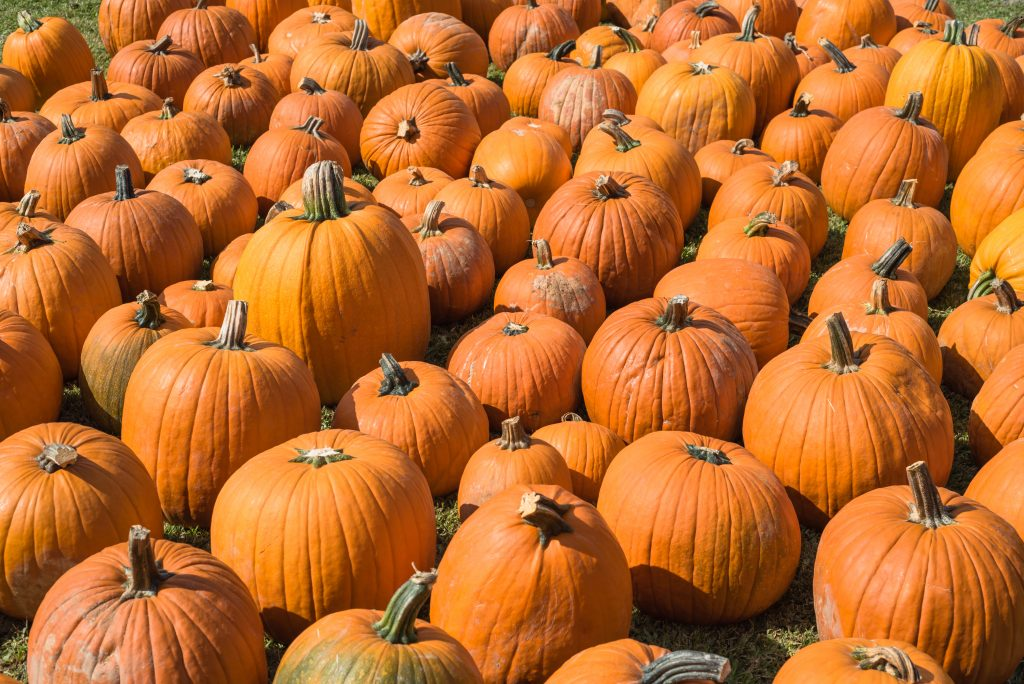 group of halloween pumpkins houston tx