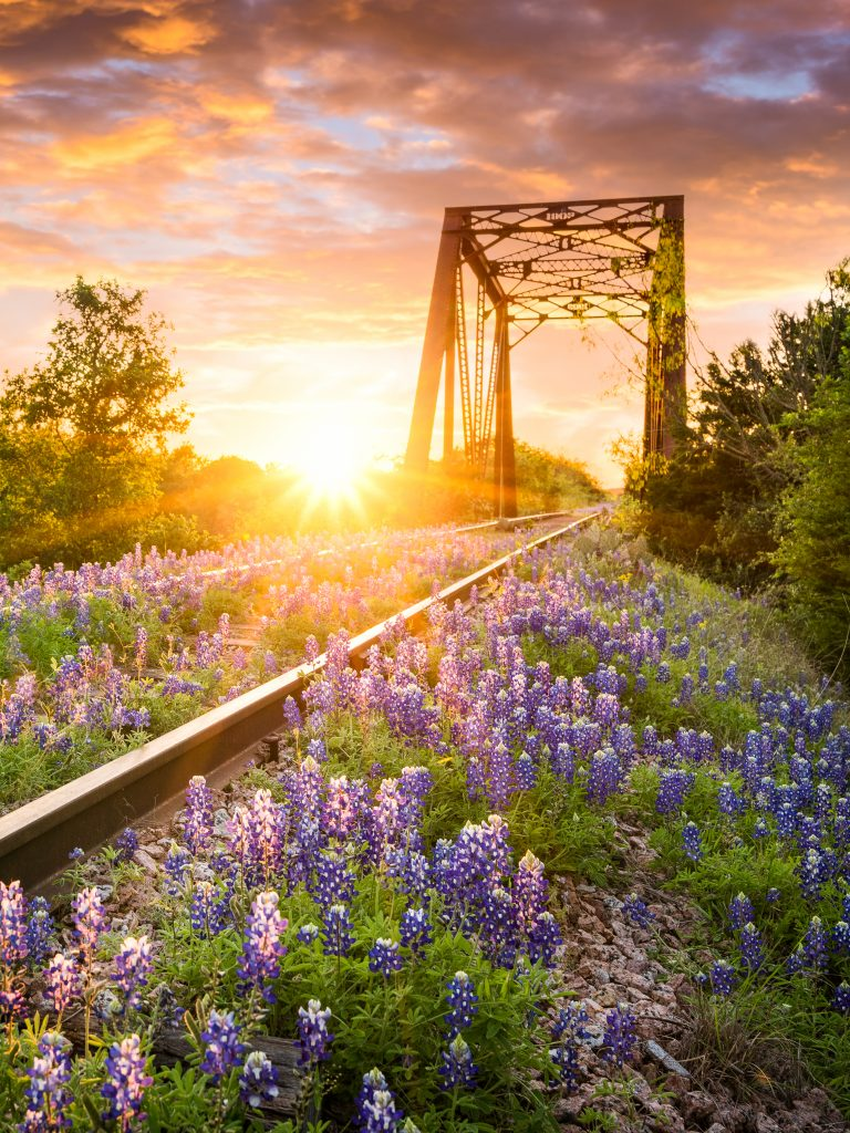 texas train tracks covered in bluebonnets at sunset, best songs about texas country music